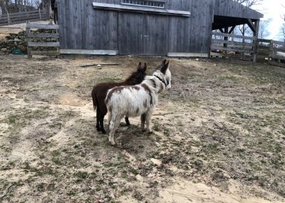 Donkeys Side Pasture