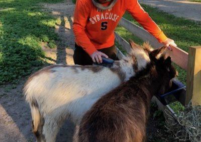 John Brushung the Donkeys