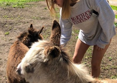 K Brushing Donkeys