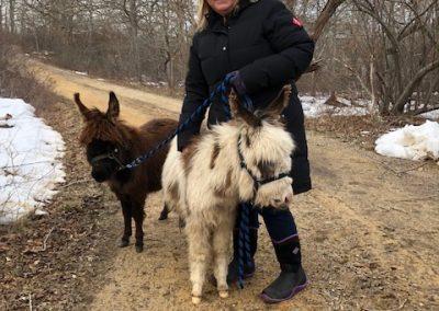MB Donkey Walk